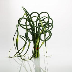 Standing Garlic Scape